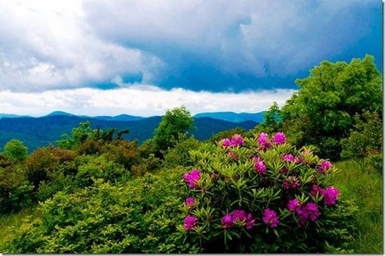 GSMNP_wildflower